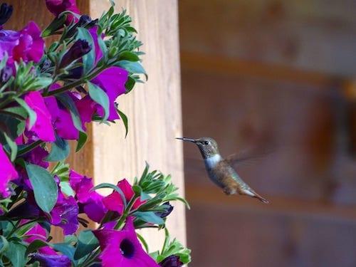 image colibri formation energeticien